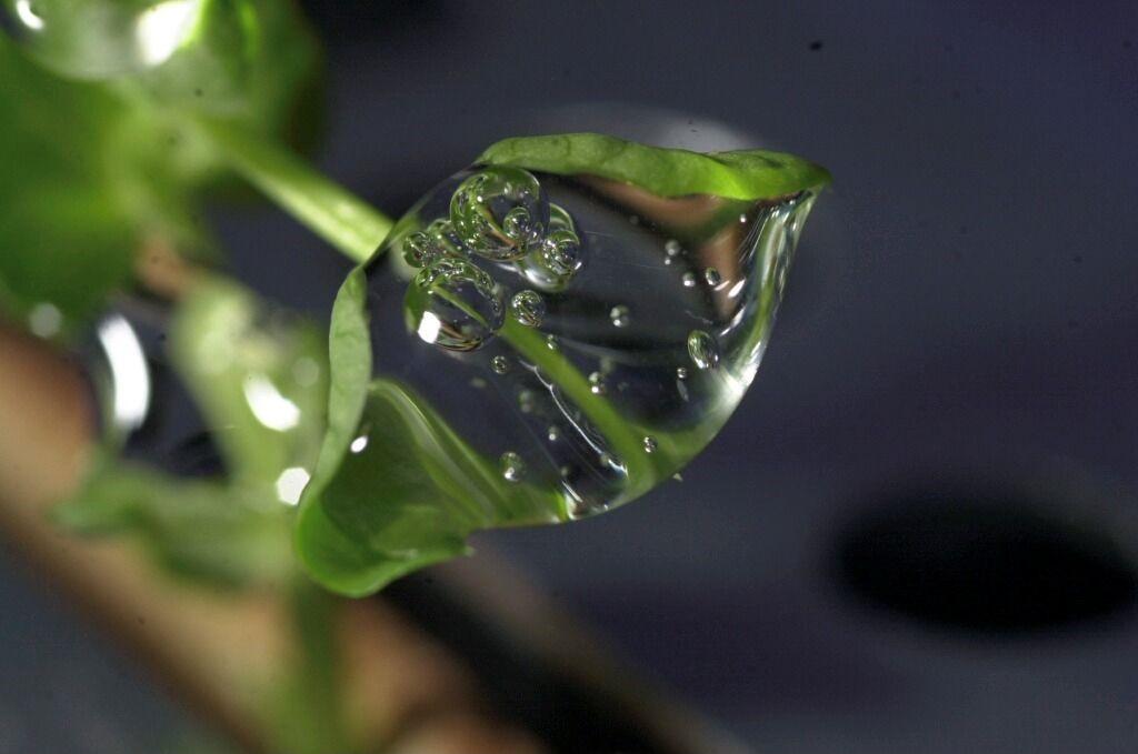 plante_dans_liss_avec_de_leau_en_impesanteur.jpg